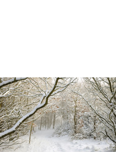 Holiday Greeting Cards Landscape Template: 581231