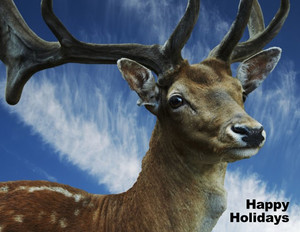 Animals Greeting Cards Portrait Template: 323071