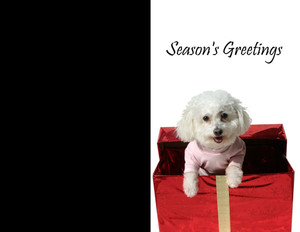 Animals Greeting Cards Portrait Template: 324129