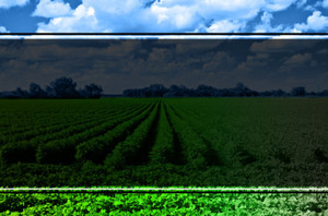 Agriculture Postcards Template: 598539