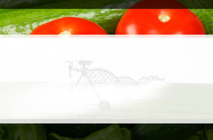 Agriculture Postcards Template: 598541